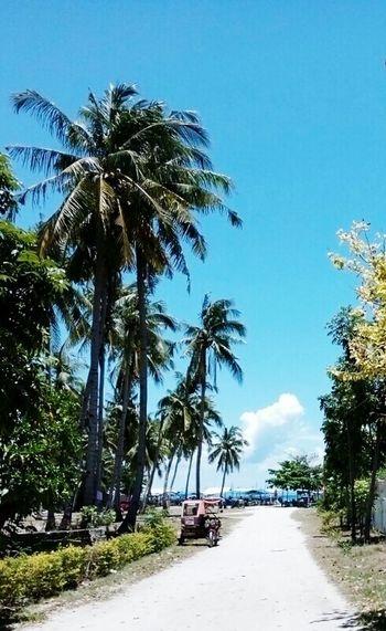 Palm Tree Blue Beach Sky Sea Nature