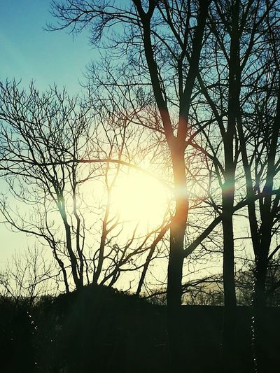 Good Morning Buonjour Buongiornomondo BUONGiORNO ♥♥ Sunlight Sky Sun Tree Sunset Nature Sunbeam Silhouette Outdoors No People Beauty In Nature Day