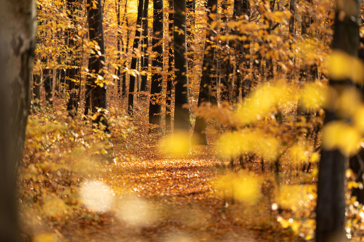 Plant Forest Tree Nature No People Selective Focus Land Growth Change Autumn Beauty In Nature Day Tranquility Yellow Outdoors Tree Trunk Trunk Sunlight Plant Part WoodLand