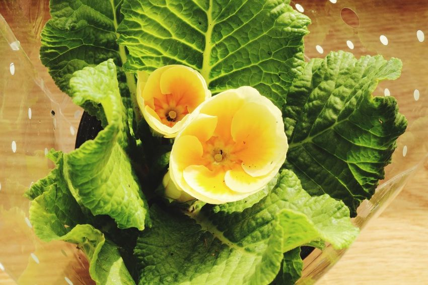 Yellow flowers Leaf Food And Drink Freshness Green Color Fruit Healthy Eating Food No People High Angle View Close-up Indoors  Day Plant Growth Nature Beauty In Nature