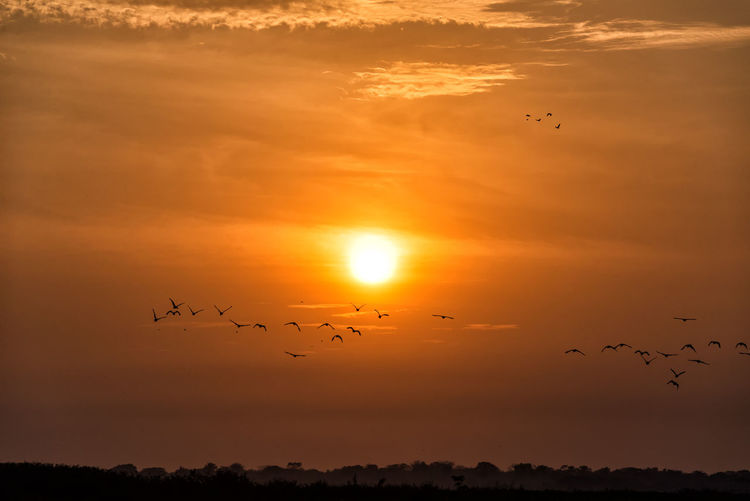 Flock of birds flying off into the sunset near Mompox, Colombia Avian Beauty In Nature Bird Birds Colombia Flock Of Birds Flying Idyllic Landscape Magdalena River Migrating Mompos Mompox  Nature Orange Color Outdoors Rio Magdalena Rural Scenics Sky Sun Sunrise Sunset Tranquil Scene Wildlife