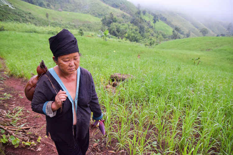 An Old Hmong woman working on her rice field Agriculture Farm Hill Tribe Woman Nature Poor  Rice Paddy Sitting Standing Thai Tree Working Working Hard Crop  Girl Ground Hard Life Hill Hmong Lifestyles Miao Mountain Northern Thailand Old Woman Rice Field Tribe
