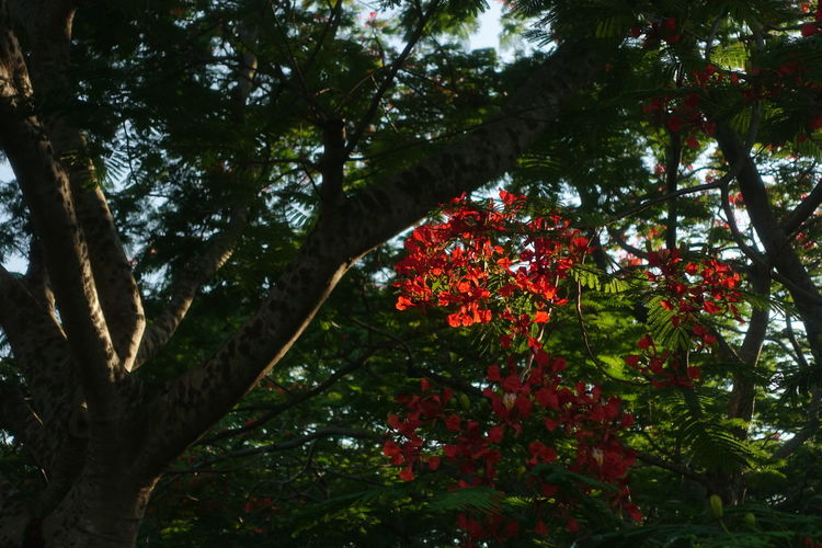 Tree Branch Forest Flower Sky In Bloom Dahlia Blossom Blooming