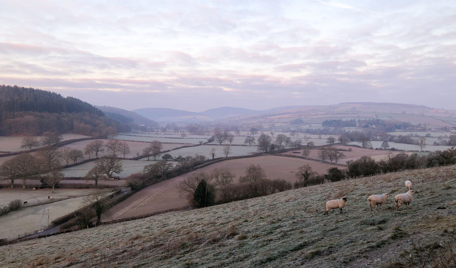 Cold winter morning landscape in Shropshire Sky Mountain Cloud - Sky Scenics - Nature Environment Tranquil Scene Landscape Beauty In Nature Tranquility Nature Tree Plant Non-urban Scene Mountain Range No People Land Sunset Field Day Outdoors