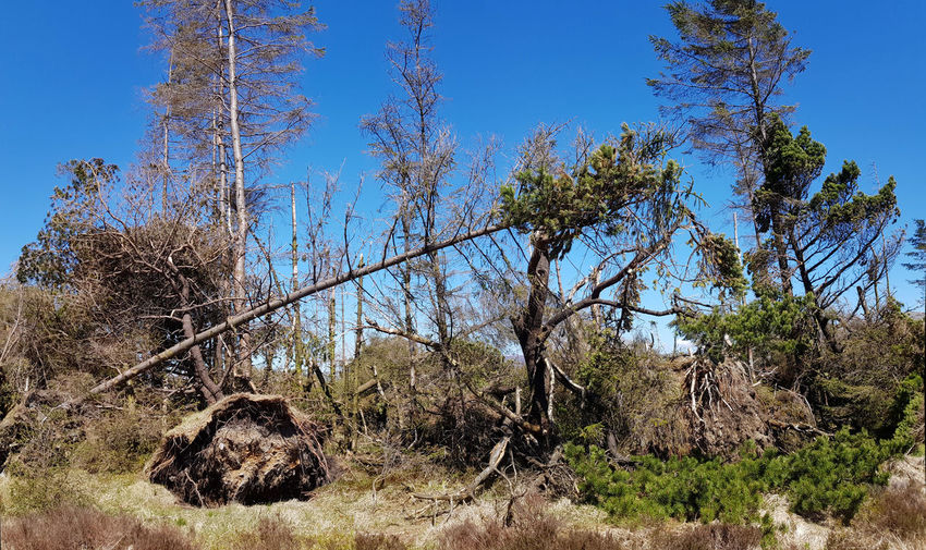 Blue Clear Sky Environment Fallen Trees Impenetrable Jumble Landscape Outdoors Sky Tree
