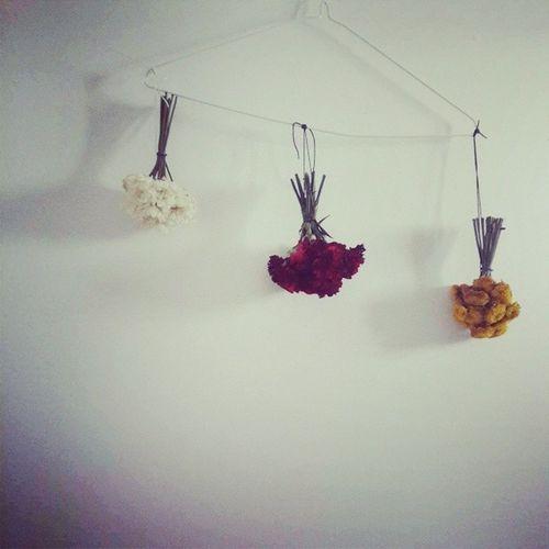 꽃 말리기. 하나둘셋 Daisy Caneision Pinokio 꽃말리기 decoration
