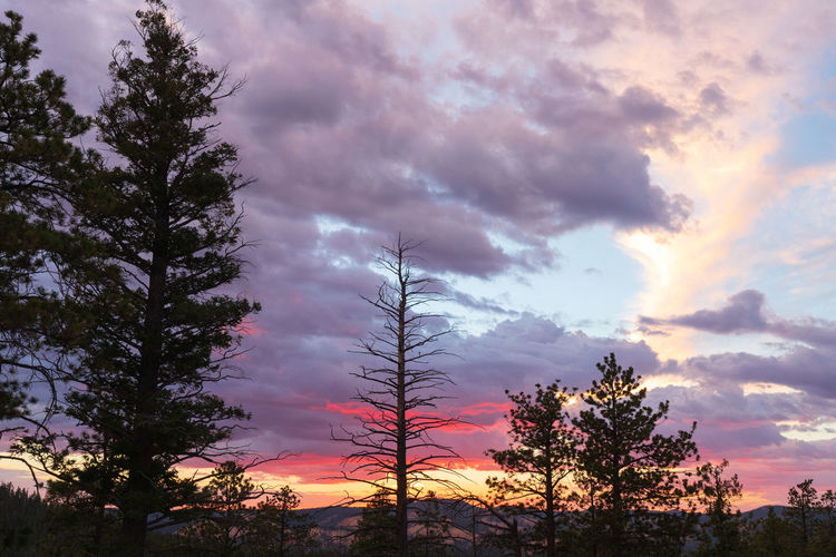overwhelming sunset impressions Tree Sky Plant Sunset Scenics - Nature Beauty In Nature Nature Cloud - Sky Tranquility Tranquil Scene No People Non-urban Scene Silhouette Growth Low Angle View Orange Color Land Idyllic Outdoors Dramatic Sky Coniferous Tree Bryce Canyon USA