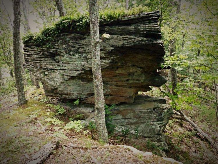 Summer2014 SlateRun Pennsylvania Color Photography Nature Trees Rock Rocks Outdoors Hiking