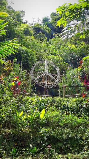at peace with nature EyeEmBaguio Baguio City, Philippines Tam Awan Village Peace Peace Sign  Mother Earth Eyeem Philippines EyeEmNewHere Grass Day Green Color Full Frame Nature Backgrounds Field No People Outdoors Growth Plant Beauty In Nature Lush Foliage