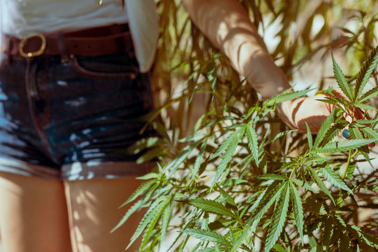 Midsection of woman standing by cannabis plant