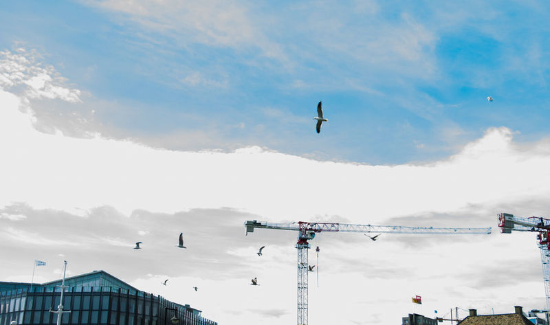 Building Crane City Life Flying Birds Nature Sky Urban Landscape A Bird's Eye View
