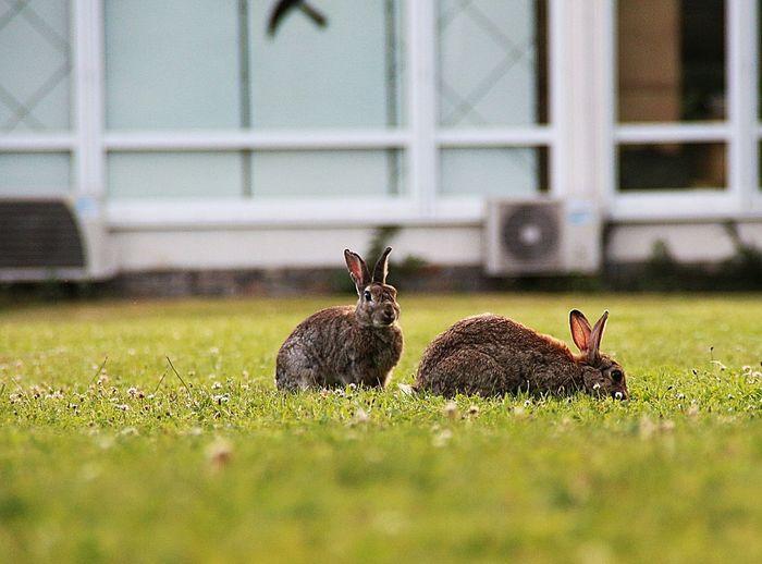 Kaninchen Relaxing Get Well Soon!