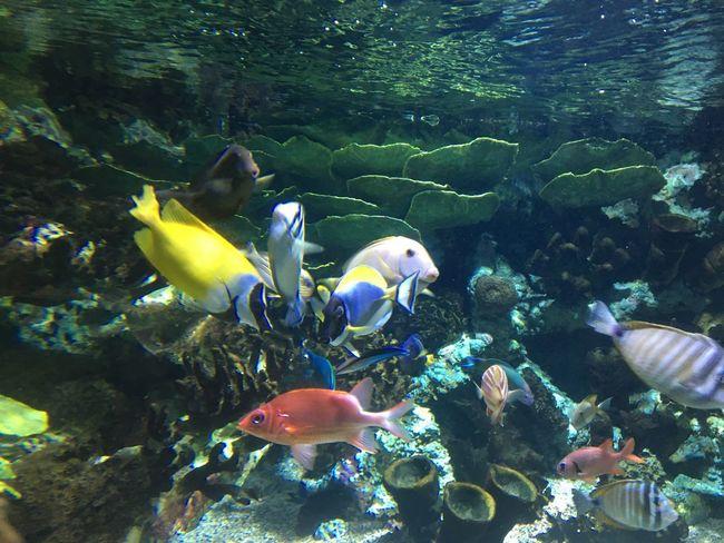 Water Animal Animal Wildlife Animals In The Wild Animal Themes Group Of Animals Vertebrate Swimming Underwater Fish Sea Life Large Group Of Animals Nature School Of Fish Ecosystem