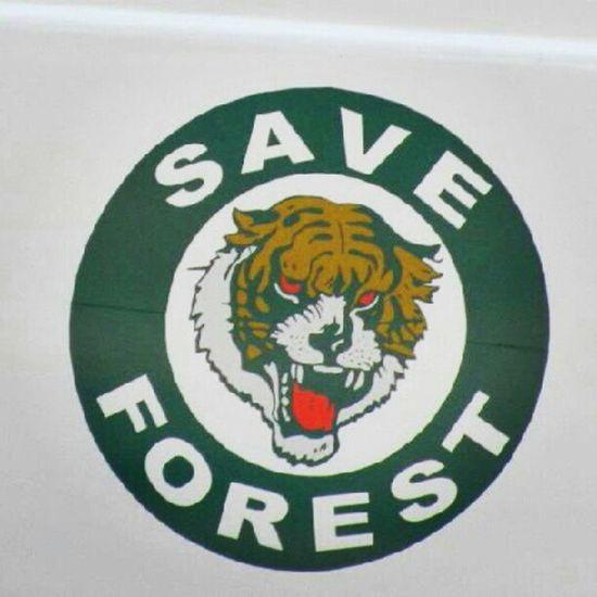 Forest Message Tiger Appeal Wildlife