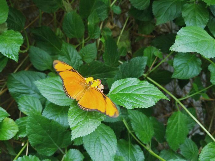Perching Leaf