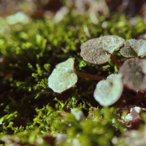 Close-up Beauty In Nature Freshness Growth Moss Microgarden Macro Microscape