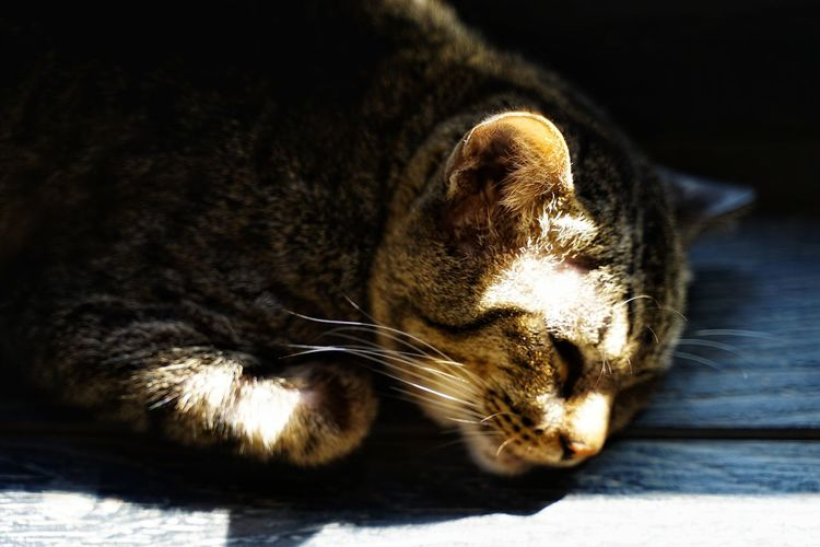 No People No Person Day Sleeping Cat Pets Water Whisker Lying Down Feline Close-up Leopard Cat Family Domestic Cat Spotted Stray Animal Tabby Cat Tabby Cat Big Cat Sleeping