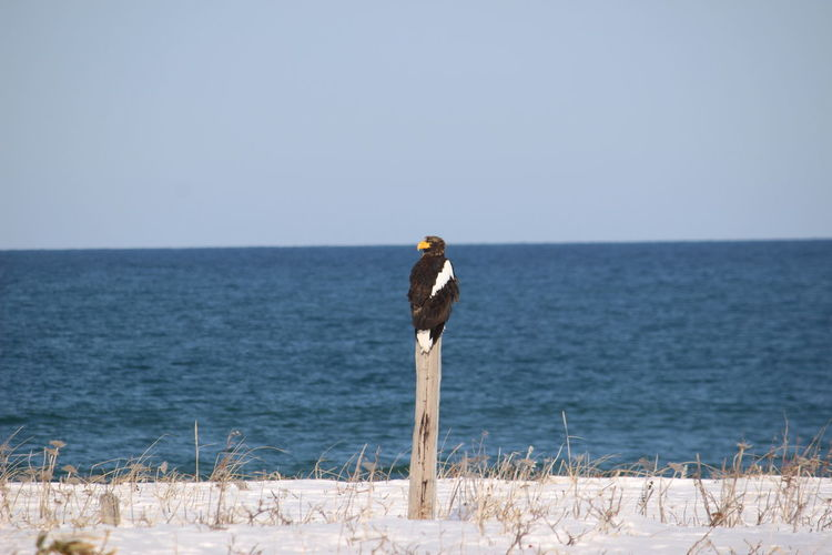 View of bird on beach against clear sky