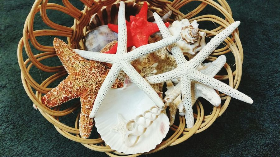 Missouri Ozarks United States Starfish  Fresh Sea Shells Collection EyeEm Selects High Angle View No People Day Close-up Beach Outdoors