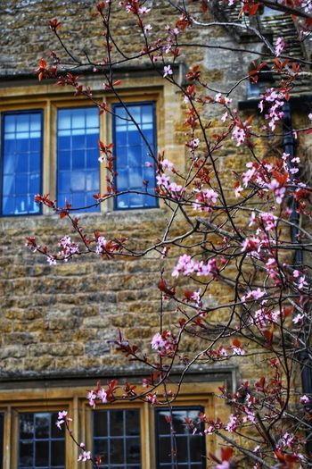Cotswold Stone and Blossom Cotswolds Countryside Photowalktheworld Nikonphotography Nikonphotographer Stone Material Tree Flower Branch City Window Springtime Architecture Building Exterior Built Structure Sky Cherry Blossom Cherry Tree Blooming Blossom