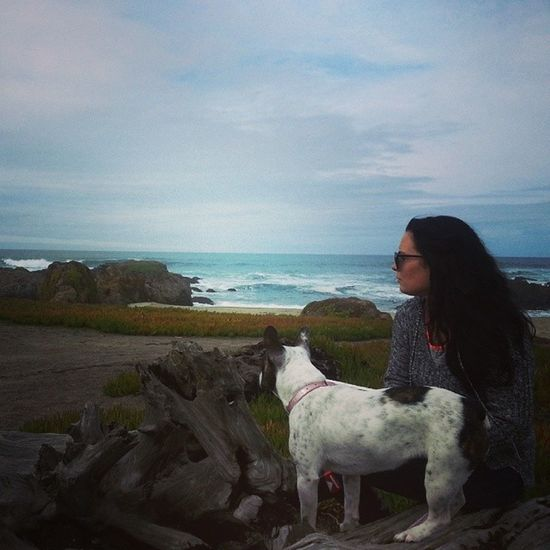 Frenchie #doglover  Frenchie Road Trip Cali Sand And Sea Ocean A Girl And Her Dog