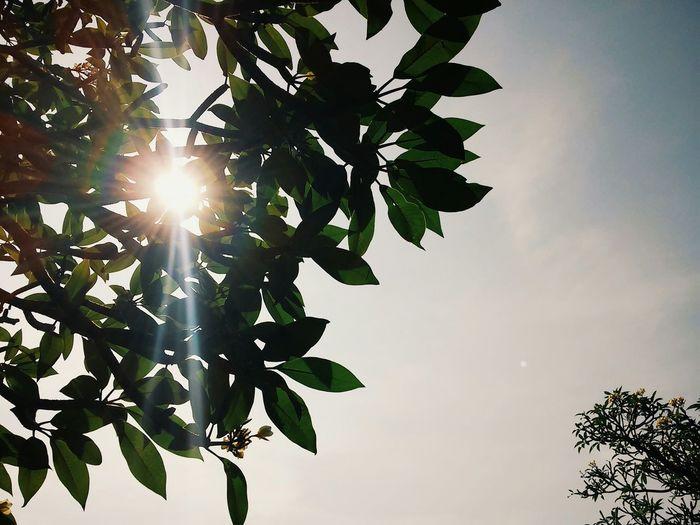 Exploreboyolali Sunrise Nature Urban Nature Pohondanlangit Bennytivity