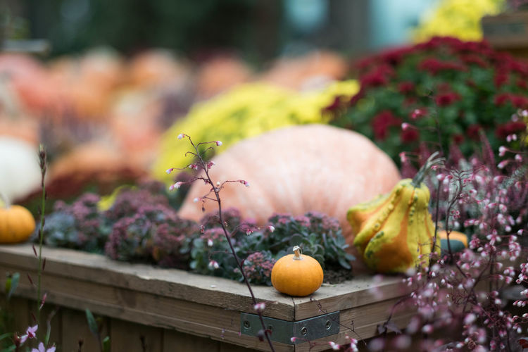 Autumn Halloween Pumpkins Autumn Food Freshness Healthy Eating Nature No People Pumpkin Vegetable