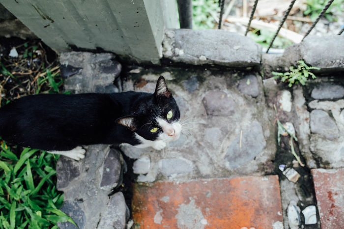 Animal Themes ASIA Banda Island Cat Day Domestic Animals Domestic Cat Feline Floor INDONESIA Maluku  Nature One Animal Outdoors Pets Travel Wildlife