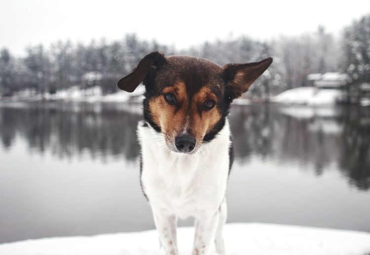 Pets Snow Cold