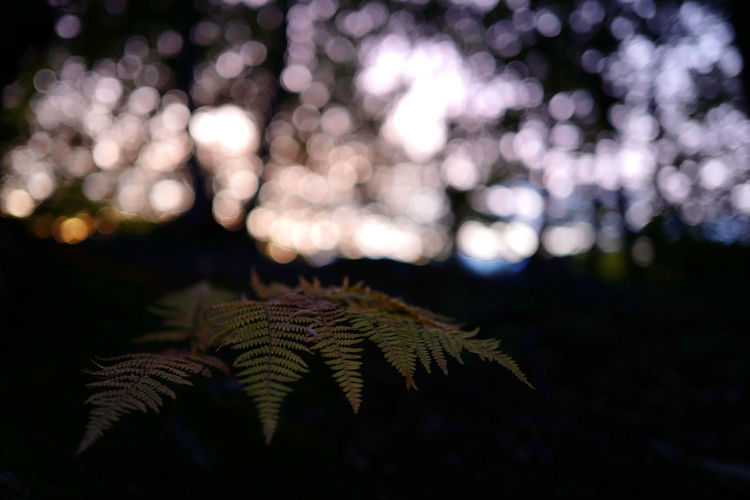 Vulnerability  Fragility Land Day Green Color Fern Tranquility Outdoors Growth Beauty In Nature Selective Focus Focus On Foreground Tree Close-up No People Nature Plant Part Leaf Plant