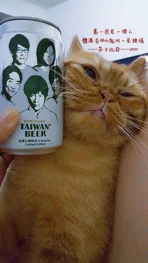 Taiwanbeer Mayday  翻轉視界 喵星人 猫 Wish Catboy Focus 台灣文化