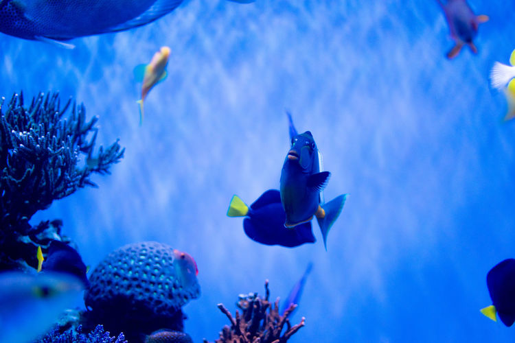 Animals In The Wild Animal Wildlife Vertebrate Sea Fish Water Underwater Animal Themes Animal Swimming Sea Life Blue Group Of Animals Nature No People Marine Aquarium Animals In Captivity Tank UnderSea Outdoors School Of Fish