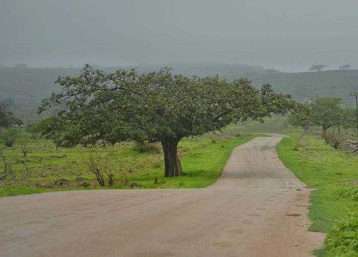 Oman Salalah 2015  Green Road Tree Beautiful Green Nature Nature