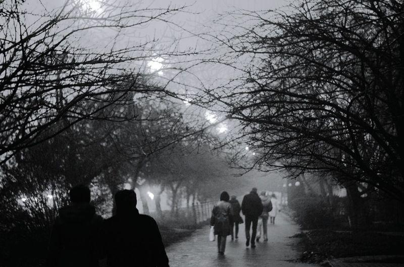 Fog Morning Streetphotography Light Blackandwhite