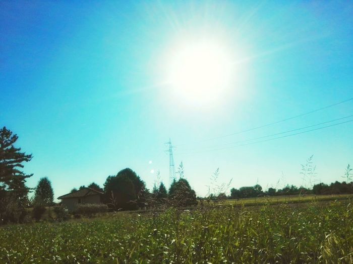 Field Tree Rural Scene Clear Sky Agriculture Sunlight Sun Field Sky Grass Landscape Electricity Pylon Electricity Tower Shining Streaming Power Cable Power Line  Cultivated Land