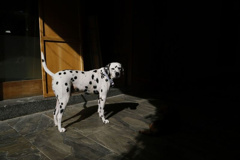 Dog standing at home