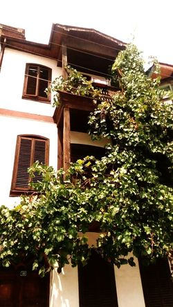 Architecture Built Structure Low Angle View House Plant Balcony Sky Creeper Plant Building Exterior Window Growth Day Creeper No People Architecture Outdoors Escape Summer2016 Summertime Seascape Historic Tirilye Medusangel