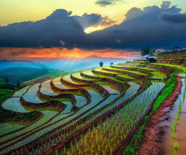 Sky And Clouds Beautiful Farming Paddy Green Agriculture Agricultural Land Check This Out Mountain View Taking Photos EyeEm Best Shots EyeEmBestPics