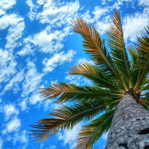 Palm tree with blue skies on a summer day. Tree Coconut Tree Coconut Clouds And Sky Cloud Clouds Summer Summertime Colour Of Life My Best Travel Photo