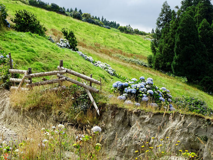 Nature_collection Flower Collection Landscape Tree Rural Scene Agriculture Rice - Cereal Plant Field Farm Crop  Plantation