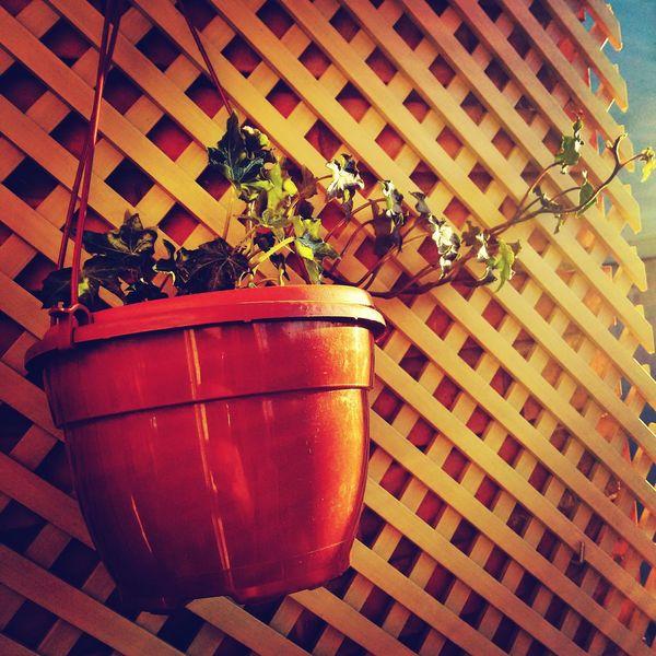 Hiedra Taking Photos EyeEm Nature Lover Plants 🌱 Taking Photos Plant I Love Plants Eyeemnaturelover
