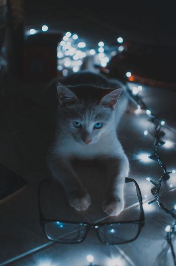 Close-Up Portrait Of Cat In Darkroom