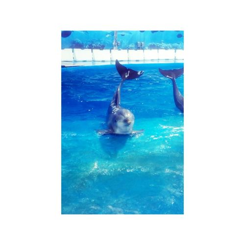 Animals Picture Dauphin Espagne 🇪🇸