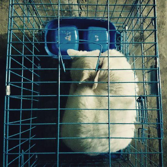 囚. Cat Sleep Zzz Zzzz