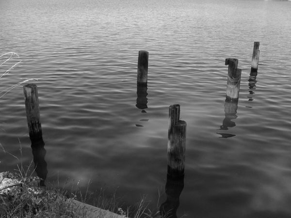 Beauty In Nature Eye4photography  EyeEm Best Shots EyeEm Nature Lover Lake Nature No People Non-urban Scene Outdoors Pole Scenics Tranquil Scene Tranquility Water Water Bird Water Surface Waterfront Wave Pattern Wood - Material Wooden Post