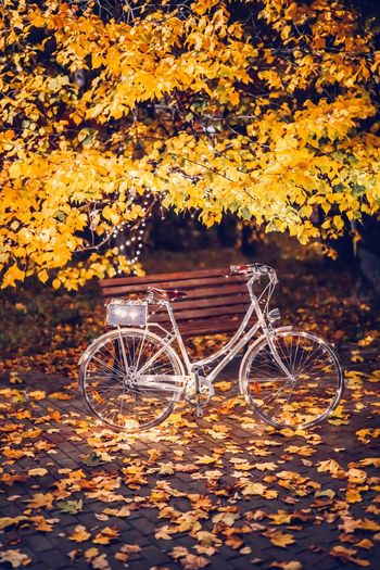 Autumn No People Nature Leaf Plant Part Change Bicycle Outdoors Plant Leaves Orange Color Beauty In Nature Transportation Tranquility Water Day Land Lake Mode Of Transportation