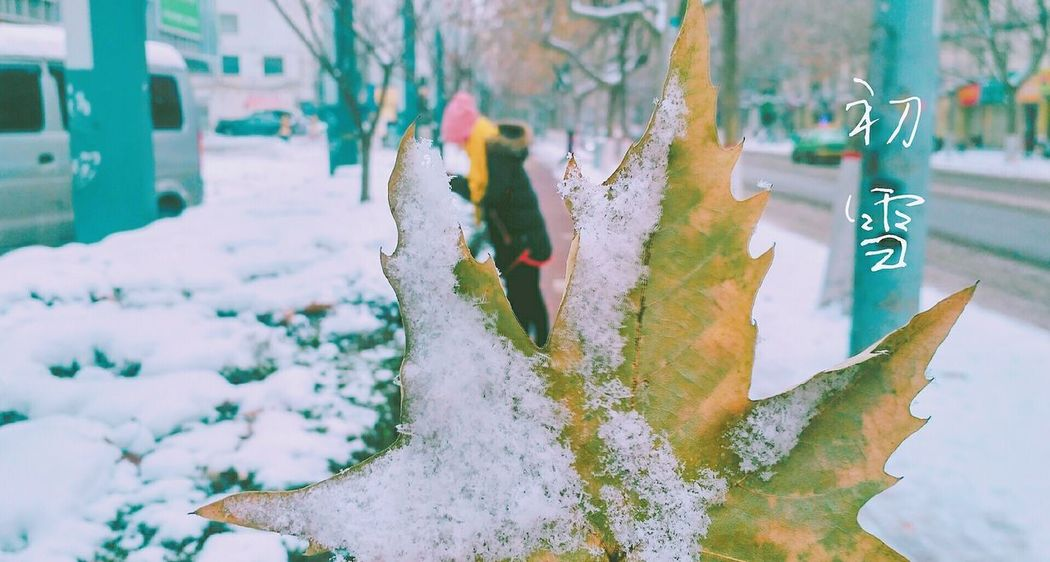 Snow ❄ Leaf Day Nature Girl Winter Outdoors Snow Plant Beauty In Nature City 2018 EyeEm Cold Temperature Taking Photos See What I See Enjoying Life Hello World Artphotography Art Is Everywhere EyeEmNewHere Lifestyles EyeEm Best Shots Snowing Colorful Weekend