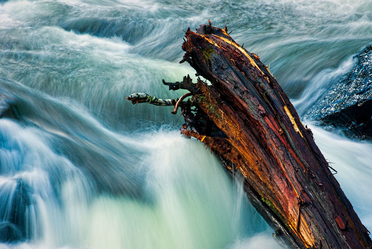 Qualicum Falls Animal Themes Day Love Moving Water No People One Animal Outdoors Sea Swift Turbulent Waters Water