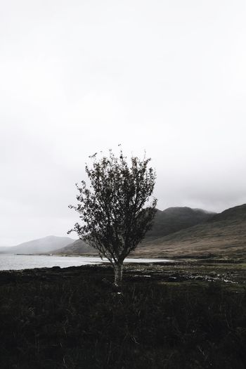 Scottish Highlands Scotland Schottland Foggy Fog Landscape Lone Isolated Tranquility Nature Tranquil Scene Beauty In Nature Clear Sky Scenics Outdoors Sky Day No People Branch Tree