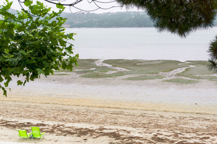 Scenic view of beach against trees